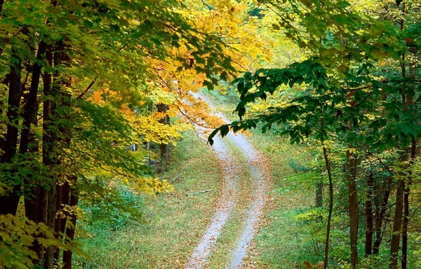 Picture road, autumn, trees, Leaves