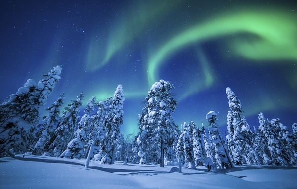 Picture winter, forest, the sky, nature, lights, positive, beautiful