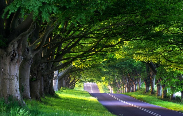 Picture road, forest, summer, trees, nature, travel, the way, tree, road, spring, alley, journey, road, way, …