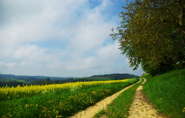 Picture road, field, forest, summer, grass, trees, flowers