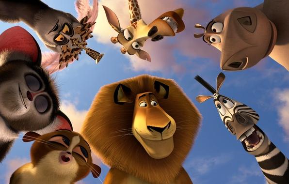 Picture animals, animals, cartoon, lemurs, Madagascar 3, Alex the lion, king Julian, Hippo Gloria, mort, Zebra …