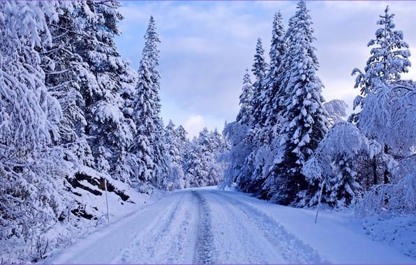 Picture winter, road, forest, snow, trees, blue, ate