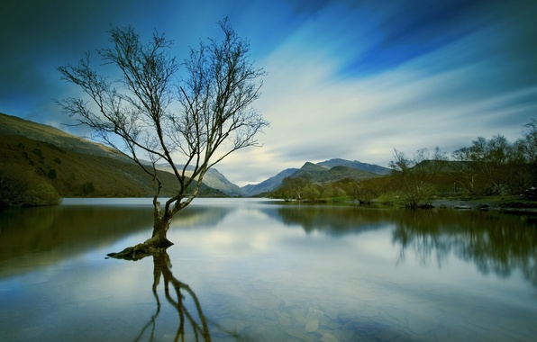 Picture landscape, lake, tree