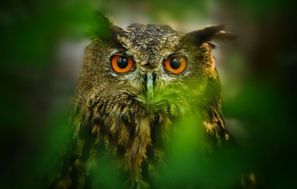 Picture eyes, leaves, owl, bird, blur