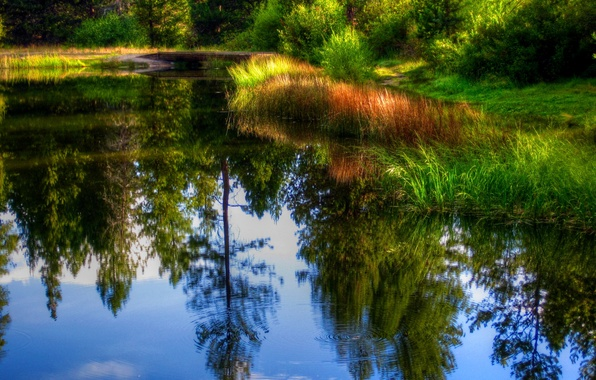 Picture forest, grass, water, trees, pond, reflection, the reeds, the bridge, the bushes