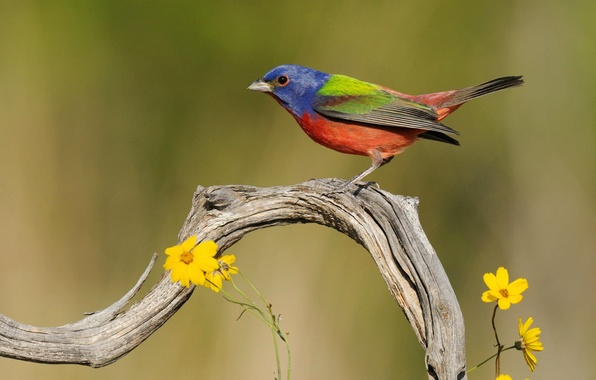 Picture flowers, nature, bird, branch