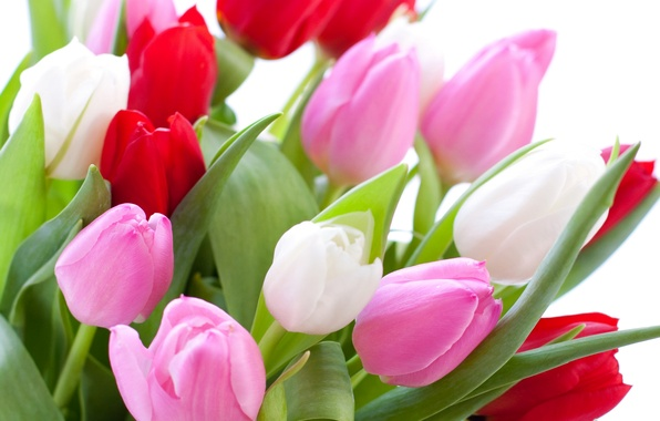 Picture leaves, bouquet, tulips, white background, buds, colorful, closeup