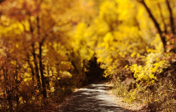 Picture road, autumn, nature, foliage, bokeh