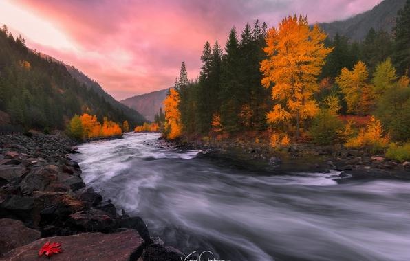 Picture autumn, forest, nature, river, stones, rocks, paint, stream