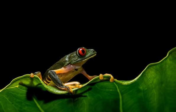 Picture sheet, eyes, frog, wildlife