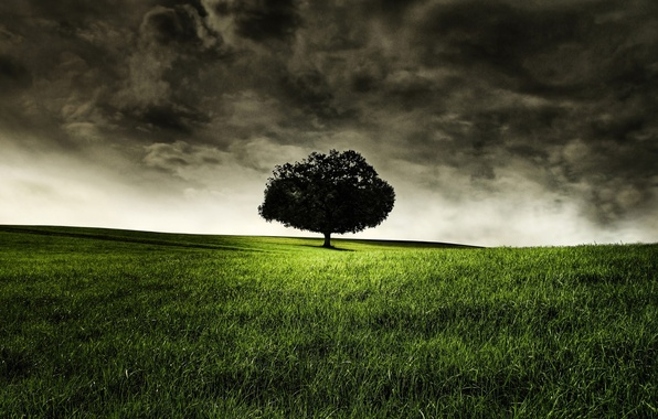 Picture grass, trees, nature, loneliness, photo, landscapes