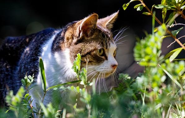 Picture summer, grass, cat, plants