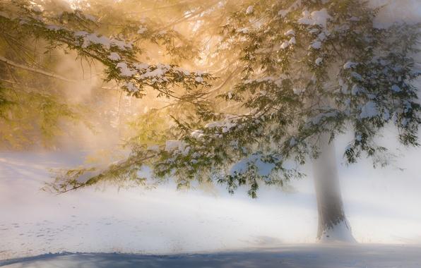 Picture winter, light, snow, trees, solar