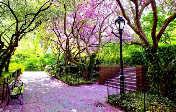Picture leaves, landscape, nature, green, Park, petals, Trees, alley, bench