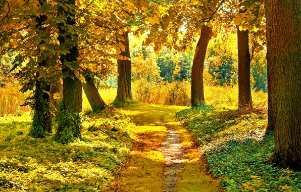 Picture autumn, forest, grass, leaves, the sun, trees, branches, nature, yellow, green, path