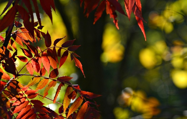 Picture leaves, macro, background, tree, widescreen, Wallpaper, blur, red, wallpaper, leaves, widescreen, background, macro, tree, bokeh, …