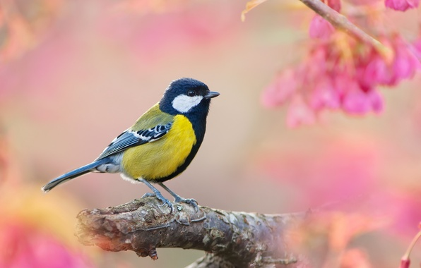 Picture bird, branch, tit