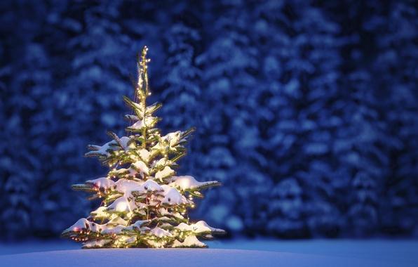 Picture lights, tree, New Year, Christmas, Christmas, night, winter, snow, tree