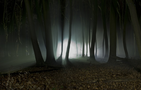 Picture forest, trees, landscape, night, nature, silhouettes