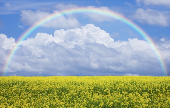 Picture field, the sky, flowers, nature, rainbow, meadow, rainbow, sky, field, nature, flowers, lawn