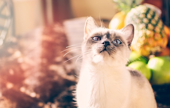 Picture cat, white, eyes, cat