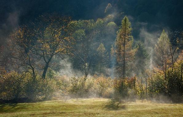 Picture autumn, forest, light, trees, fog, haze