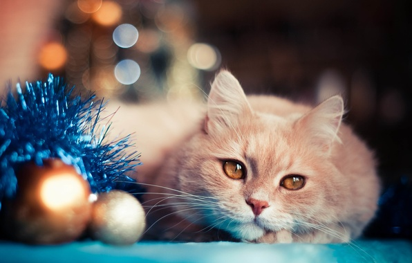 Picture cat, holiday, balls, toys, new year, tinsel, bokeh