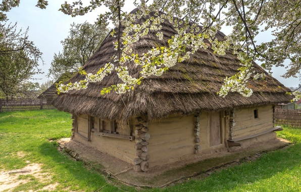 Picture grass, trees, house, the fence, garden, Ukraine, hut, blooming