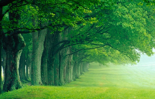Picture summer, trees, fog, Park, silence, morning, alley
