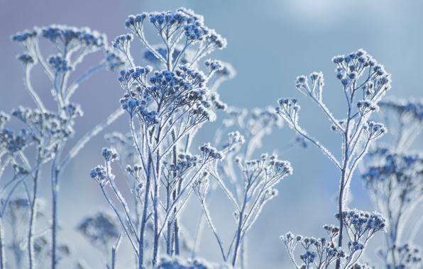 Picture winter, frost, macro, plant