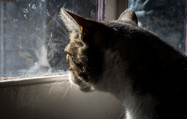 Picture cat, cat, glass, window, sitting