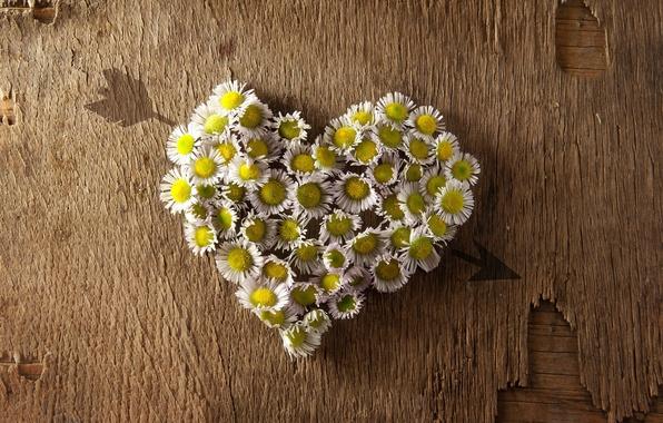 Picture flowers, background, widescreen, Wallpaper, mood, heart, wallpaper, arrow, form, flowers, heart, widescreen, background, full screen, …