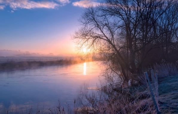 Picture trees, fog, river, morning, early spring