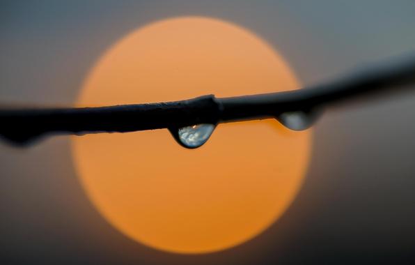 Picture fireball, sun, drops, branch