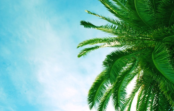 Picture beach, leaves, trees, Palma, palm trees, Africa