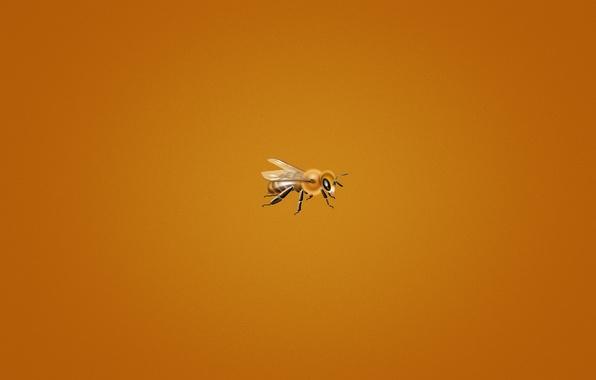 Picture bee, minimalism, orange background, small, bee, bee