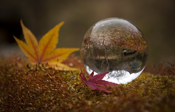 Picture leaves, nature, ball