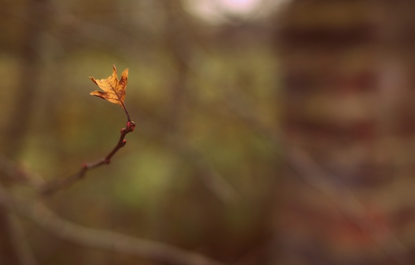 Picture macro, sprig, background, widescreen, Wallpaper, blur, branch, leaf, wallpaper, leaf, widescreen, background, full screen, HD …