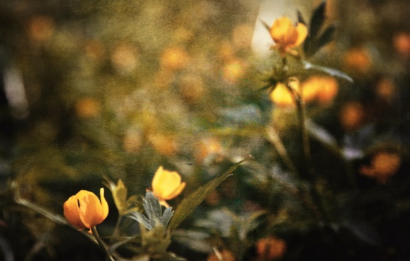 Picture flowers, style, background, texture