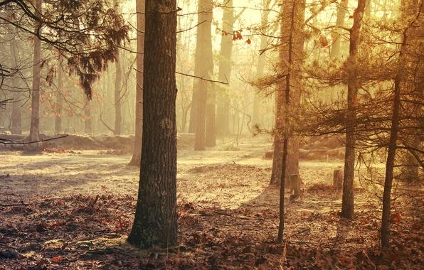 Picture landscape, beauty, Trees, foliage.