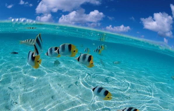 Picture sea, the sky, fish