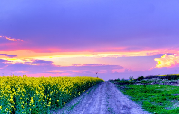 Wallpaper flowers, may, yellow, flowering, road, Nature ...