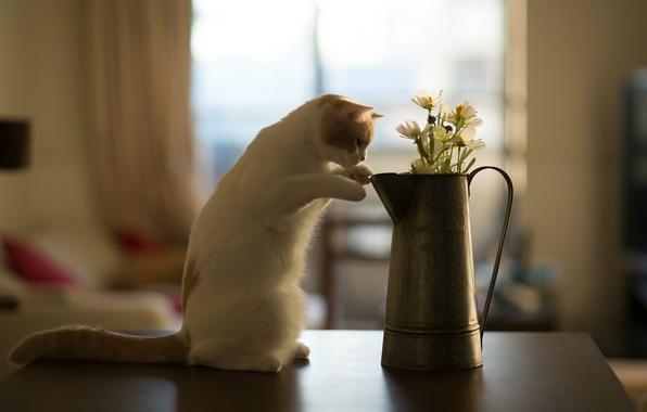 Picture cat, flowers, table, kitty, Hannah, © Benjamin Torode