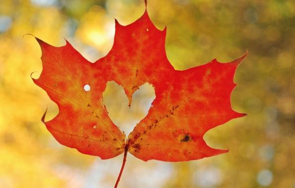 Picture autumn, macro, sheet, heart, heart, maple