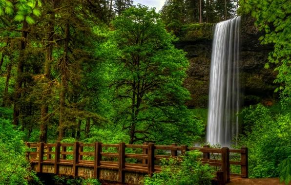 Picture forest, water, trees, landscape, bridge, nature, Park, view, waterfall, forest, trees, landscape, nature, bridge, water, …