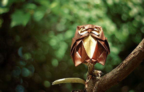 Picture forest, owl, branch, forest, origami, origami, branch, owl