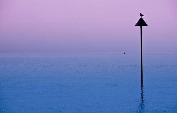 Picture night, lake, bird