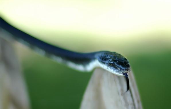 Picture language, green, Snake