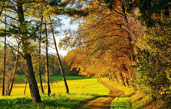 Picture autumn, forest, grass, the sun, trees, glade, yellow, green, path
