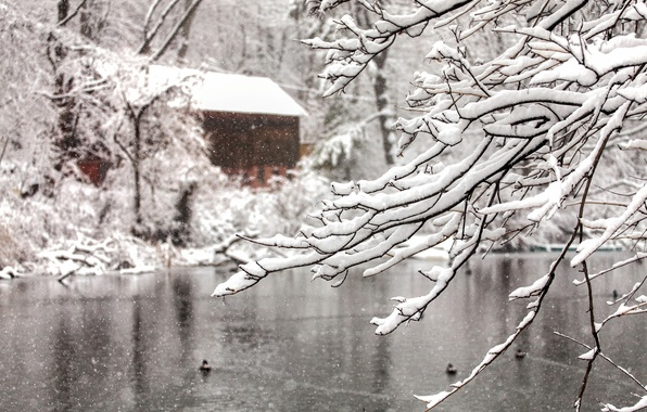 Picture winter, water, snow, trees, snowflakes, branches, nature, lake, house, tree